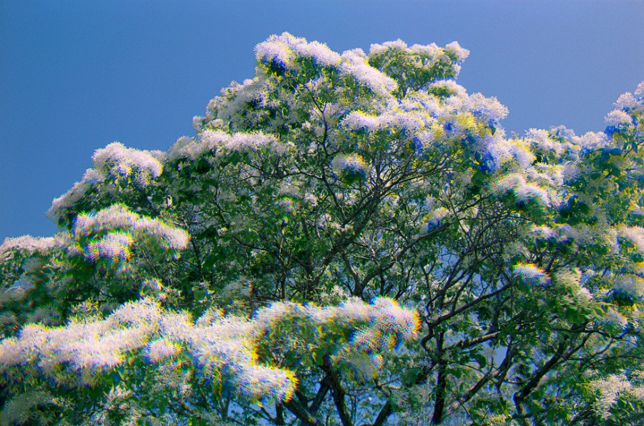 http://www.adamferriss.com/files/gimgs/th-4_floweringtree.jpg